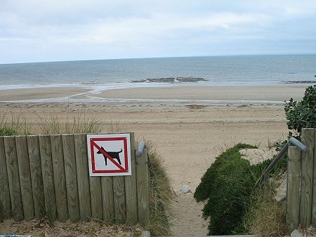 In Barneville-Carteret sind Hunde am Strand nicht erlaubt